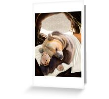 Sweet dreams, Teddy Bear Greeting Card