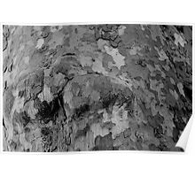 Dell Woods Knotted Bark Poster