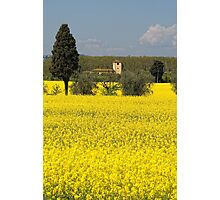 Field of Gold Photographic Print
