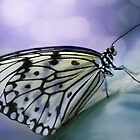 WHAT A BUTTERFLY! by abeer hassan