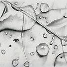 Water Drops by Elisa Camera