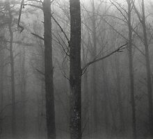 Trees In The Fog by Primitive1