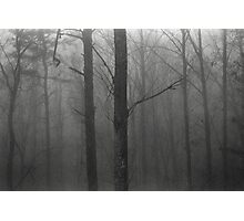 Trees In The Fog Photographic Print