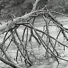 Fallen Tree by Primitive1