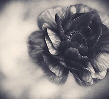 Striking in Black and White by Kadwell