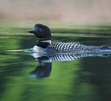 Common Loon by Rob Lavoie
