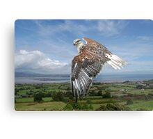 The Red-tailed Hawk over Dungarvin Bay  Metal Print