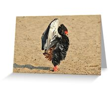 Bateleur Eagle - African Wildlife - Beautiful Anger Greeting Card