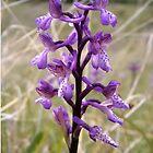 Wild memories in purple bloom by crystalline