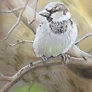 Male House sparrow  by Ray Jackson