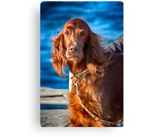 Setter dog on the pier Canvas Print