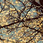 Drops of Sunlight  by mlleruta