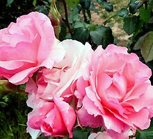 Rose #3 by Delphine Comte