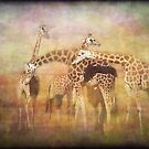A Tangle of Giraffe by Clare Colins