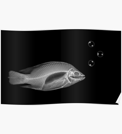 Side view X-ray of a fish on black background with bubbles  Poster