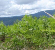 Wild Ferns in a Meadow Sticker