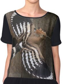 Hoopoe In Feuersbrunn, Lower Austria Chiffon Top