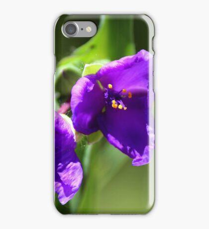 Virginia Spiderwort - Tradescantia virginiana iPhone Case/Skin