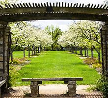 PERGOLA AT COX ARBORETUM by pjm286