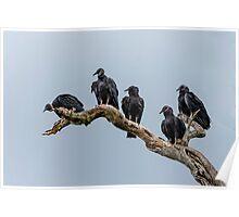 Black Vultures Poster
