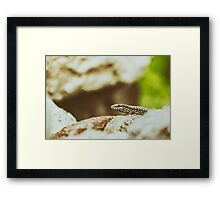 Small Rock Lizard Framed Print
