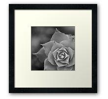 Succulent BW Framed Print