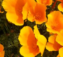 California Poppies Bent in the Wind Sticker