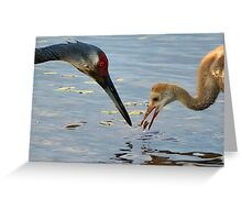 Sandhill crane parent with chick Greeting Card