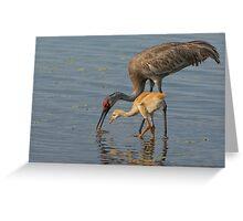 Feeding Sandhill Cranes Greeting Card