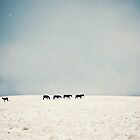 Horses in snow by catherine-rose