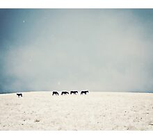Horses in snow Photographic Print