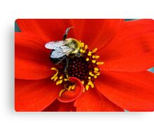 Bishop of Llandaff Dahlia & Bee Canvas Print