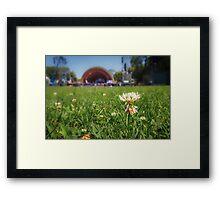 Hatch of White Clover Framed Print