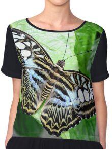 Blue Tiger Butterfly Chiffon Top