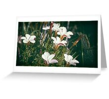 Pale Flowers Greeting Card