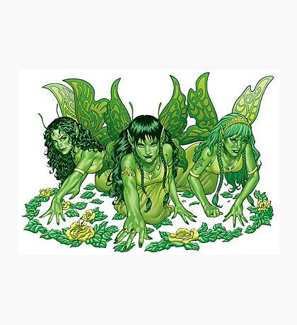 Green Fairy Trio  Photographic Print