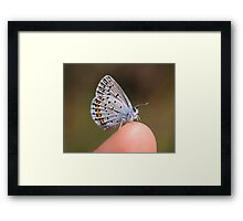 The Friendly Karner Blue Framed Print