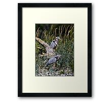 Two Hersons at Rest Among the Grasses Framed Print