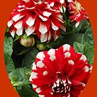Red Dahlias with White Tips by BlueMoonRose