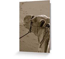 Wadi Rum ride Greeting Card