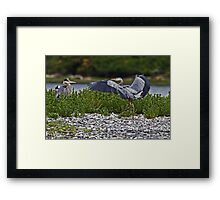 Great Blue Heron Greeting Framed Print