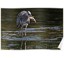 Great Blue Heron with Prized Fish Poster