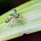 Lovely Long Legs by Fred McKie