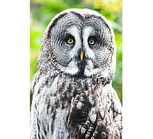 Great Grey Owl Photographic Print