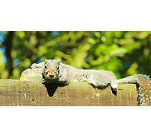 Lazy Squirrel  Photographic Print