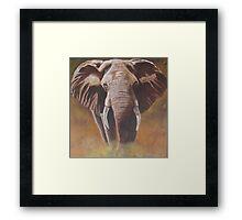 The Chobe Bull Framed Print