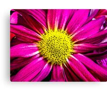 Pink with Yellow Center  Canvas Print