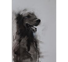 Golden Retriever Portrait, Black and White Drawing Photographic Print