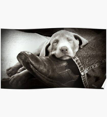 """OUR SILVER LAB """"GRACIE"""" Poster"""