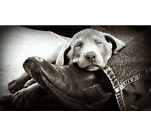 "OUR SILVER LAB ""GRACIE"" Photographic Print"